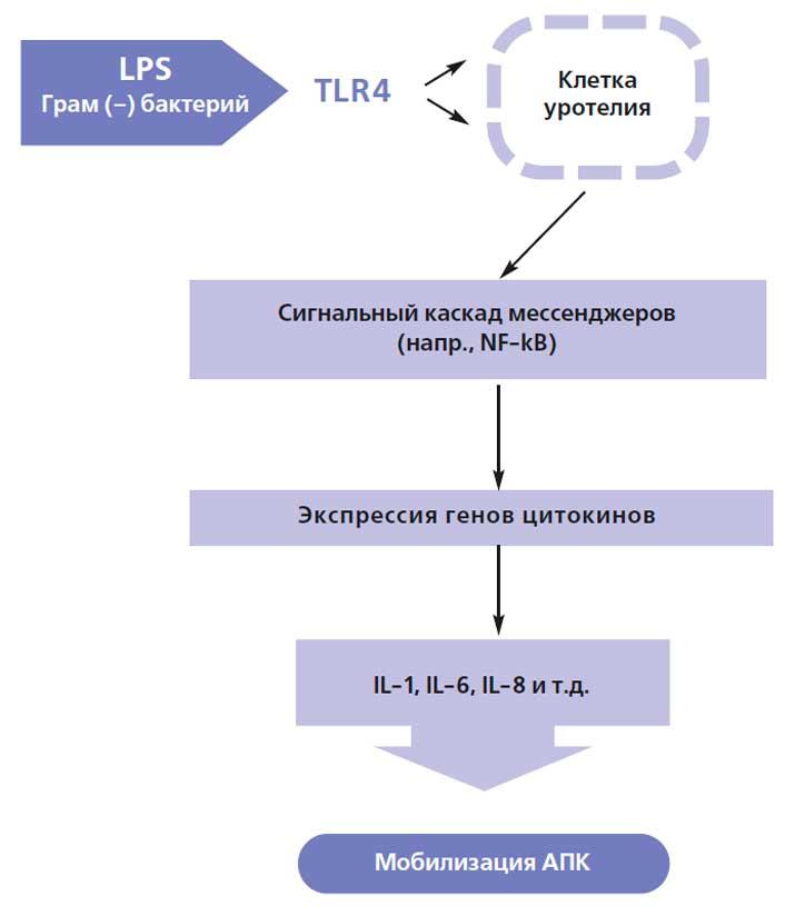 """"""",""""uro.ru"""