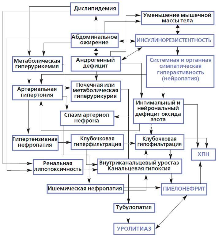 Этиология и патогенез образования камней в почках