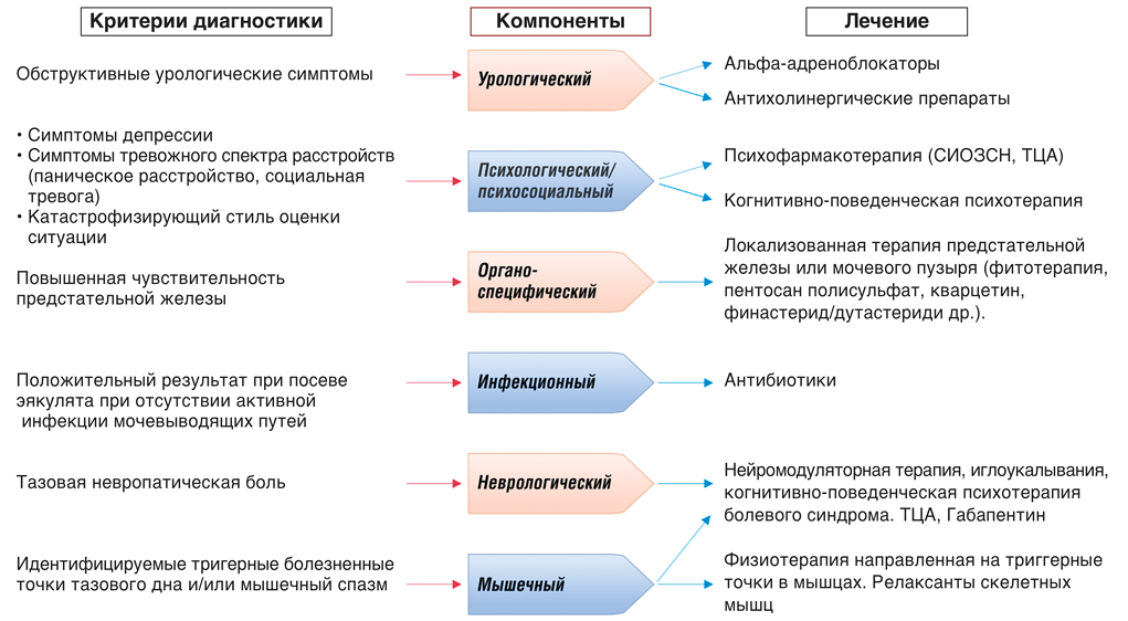 Диагностическая система UPOINT для выявление индивидуального урологического фенотипа пациентов с урологической хронической тазовой болью