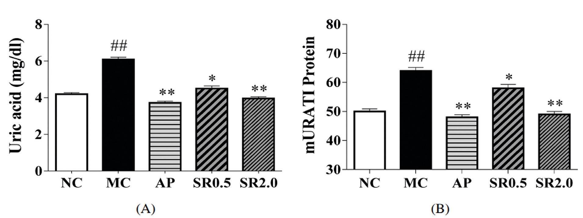 Влияние общих сапонинов S. riparia (SR) у мышей с гиперурикемией. (A) SR снижает уровень мочевой кислоты в сыворотке. (B) SR уменьшает экспрессию почечного белка mURAT1